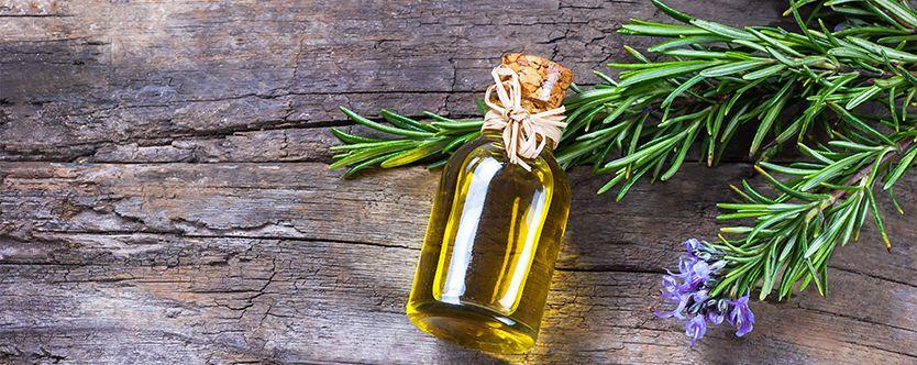 Rosemary Helps to Detoxify Liver