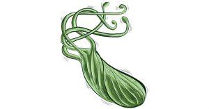H. pylori is a bacteria