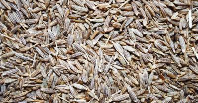 jeera-seeds