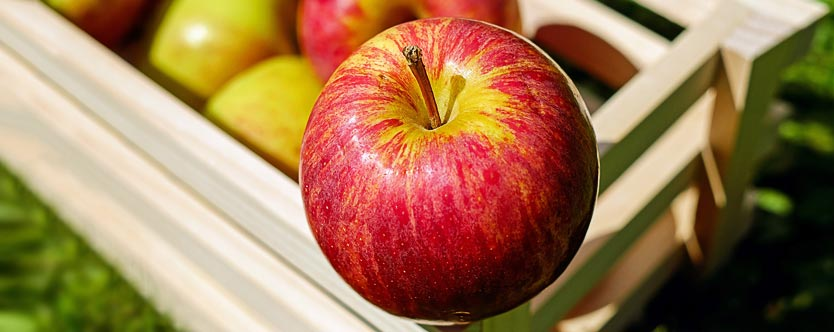 Apples should be part of diabetes meal plan