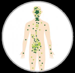 Immunity Booster Plan - Complete Detox